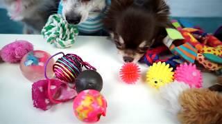 СКОЛЬКО ИГРУШЕК?! Обзор игрушек для собаки и щенка Magic Family