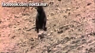 Как ловят обезьян