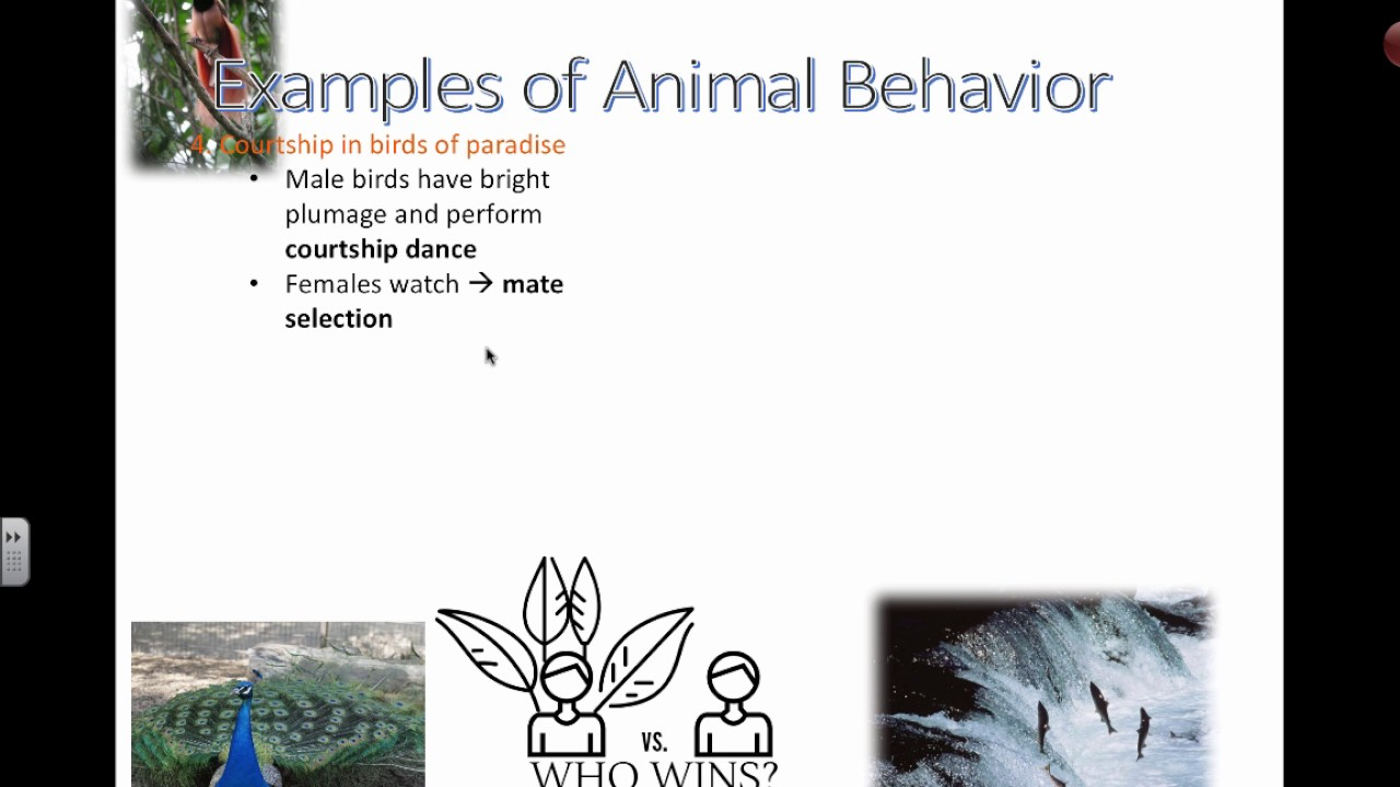 Lab 11 Animal Behavior