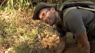 Web Exclusive: Tarantula surprise - Wild Burma: Nature's Lost Kingdom - BBC Two