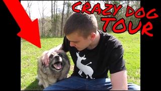CRAZY DOG TOUR?!?!