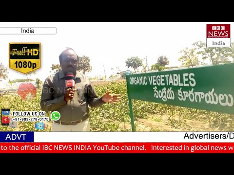 Special Story on Tadipatri Municipality Development | Clean and Green | Anantapur Dist | IBC NEWS IN