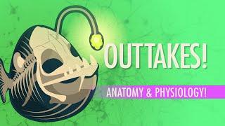 Outtakes #4: Crash Course A&P