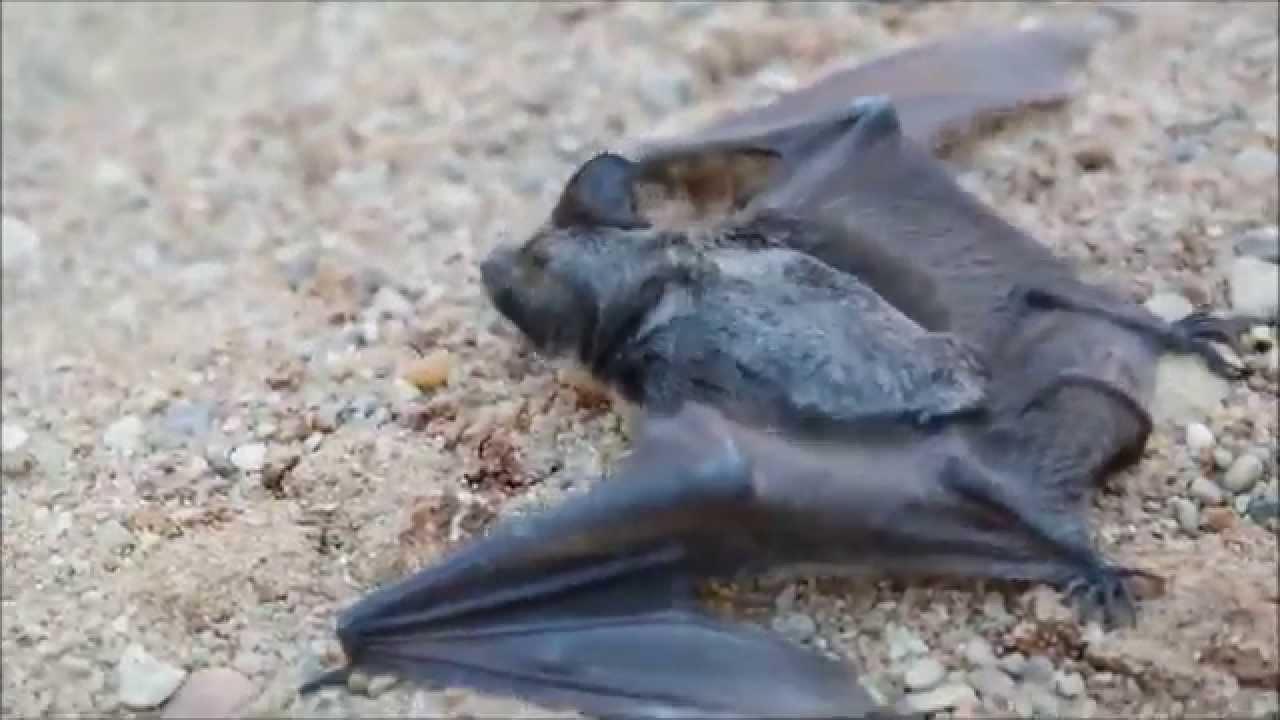 geresnės alternatyvios prekybos sistemos šikšnosparniai nerizikinga pasirinkimo sandorių strategija