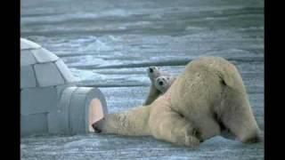 śmieszne zwierzęta -zdjecia