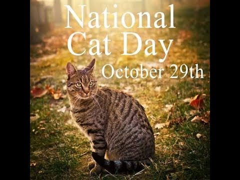 HAPPY NATIONAL CAT DAY OCT 29TH 2017