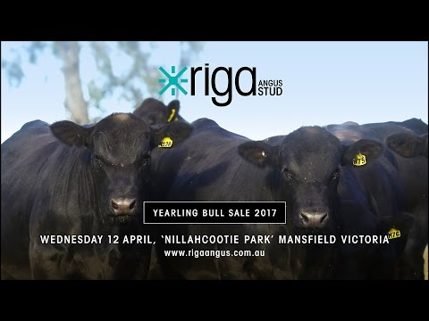 Riga Angus Sale Preview 2017