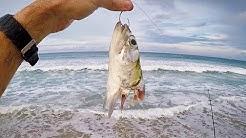 Surf Fishing is ON FIRE!! Massive Feeding Frenzy on Florida Beach!!