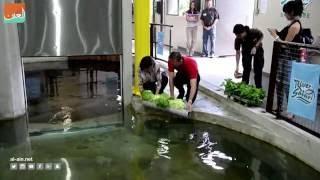 بالفيديو.. سنغافورة تعيد خرفان البحر للمحيط الأطلسي منعا لانقراضها