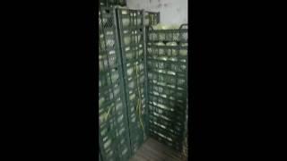 Иран: Подготовка к погрузке салата Айсберг