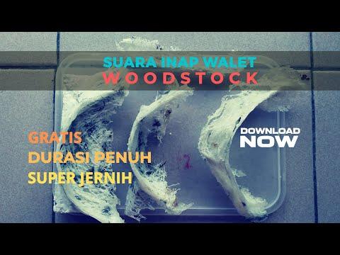 suara-inap-walet-terbaik-|-suara-inap-woodstock-full-58-minit