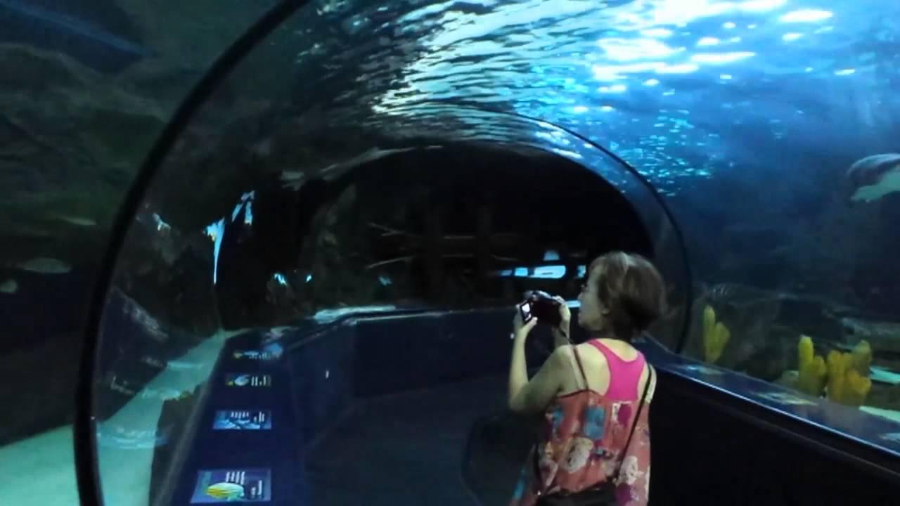 Ripley's Aquarium - Myrtle Beach, SC. - YouTube