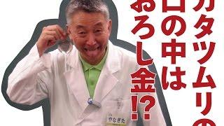 びっくり! カタツムリの歯! 広東住血線虫 検索動画 23