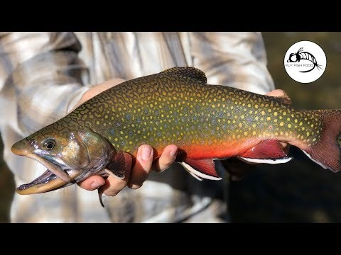 Patagonia Fly Fishing For Brook Trout - ARGENTINA