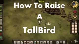 Don't Starve: How To Raise a Tallbird