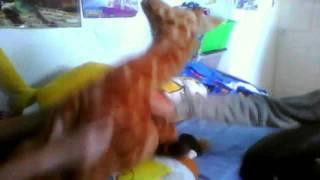 Bethany the Giraffe's Homemade Porno