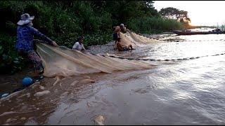 Đánh lưới bắt cá trên sông tiền trúng đậm/ catch fish on the river mekong big