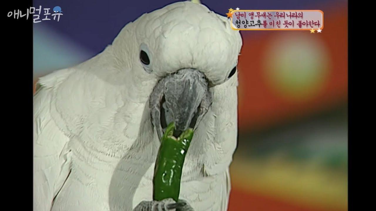 남미 앵무새는 우리나라의 【ㅊㅇㄱㅊ】를 미친 듯이 좋아한다 [스펀지]