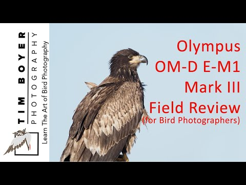 Olympus OM-D E-M1 Mark III Field Review For Bird Photographers
