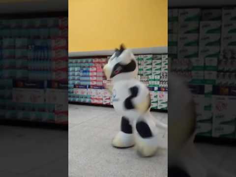 Cow dancing  Michael Jackson
