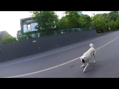 H.Ç. Vol 9 - Sabahın 5 i - 75 km - Köpek Isırıyodu !