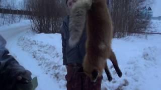 Охота на лису и зайца с русской гончей