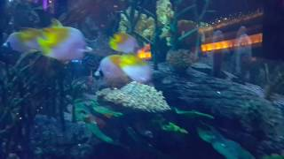 Burj Al Arab Aquarium & Fountain in Dubai 09.11.2016