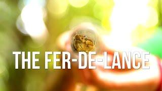 The Fer-de-Lance