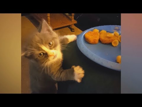 You'd never imagine how FUNNY CATS can be! - Biggest LAUGH of your LIFE!