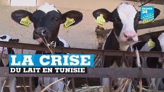 La crise du lait en Tunisie
