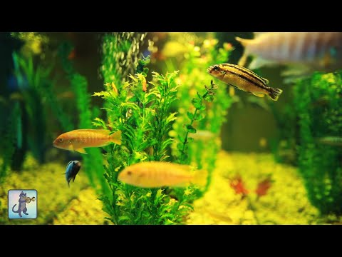 3 HOURS of Relaxing Aquarium Fish, Coral Reef Fish Tank & Relax Music 1080p HD #3