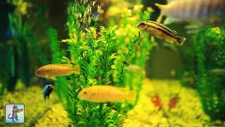 3 HOURS of Relaxing Aquarium Fish, Coral Reef Fish Tank & Relax Music 1080p HD #3