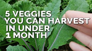 5 Fast Growing Veggies You Can Harvest in Under 1 Month