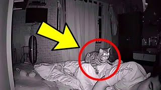 Cat Wont Stop Staring At Dad All Night, Dad Checks Video And Realizes Why