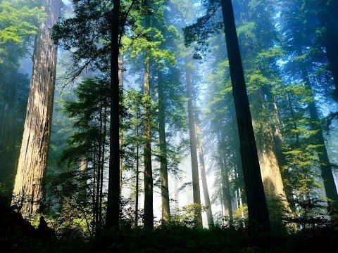 фото связанных в лесу