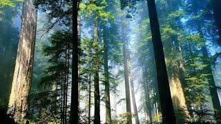 Фото слайд-шоу Природа. Лес. Часть 1.
