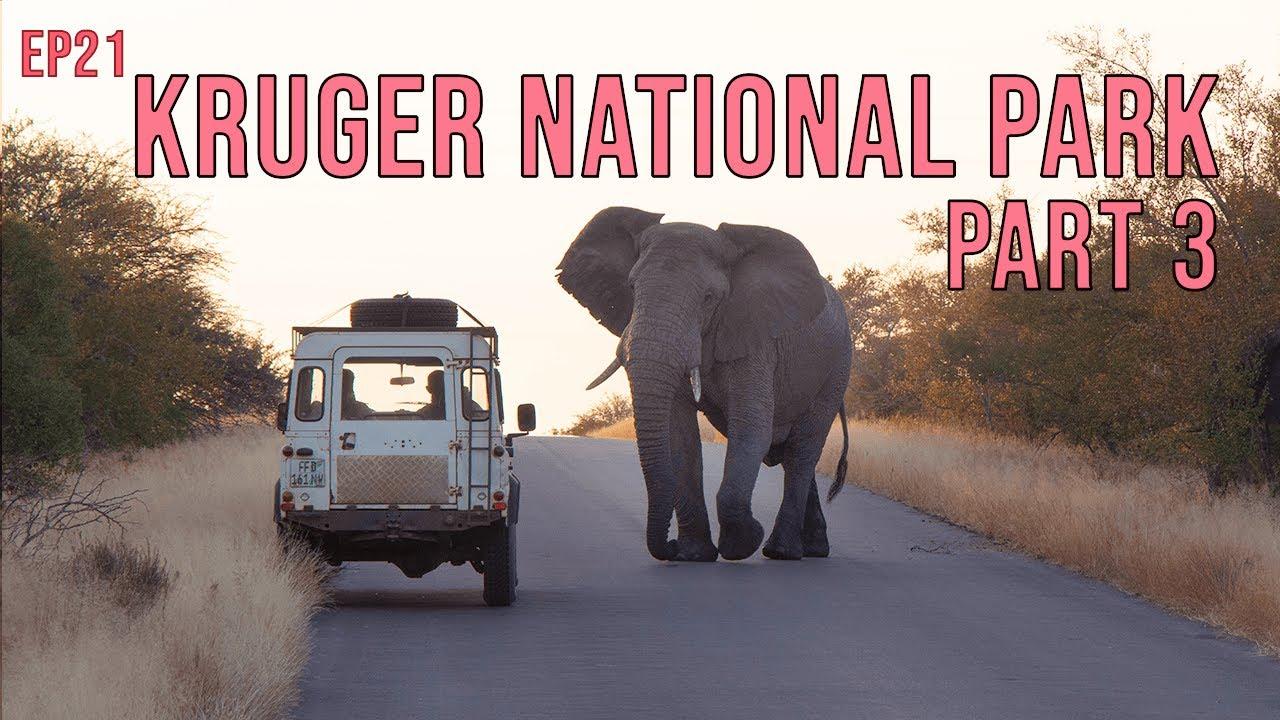 Download Kruger National Park: Part 3 - Tamboti, Lower Sabie and Crocodile Bridge (EP21)