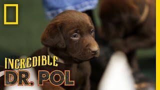 The More Puppies, The Better - Season 2, Episode 3 | Barnyard Babies with Dr. Pol