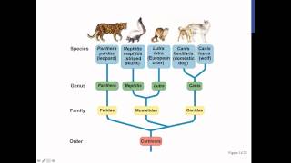 Phylogenies Screencast