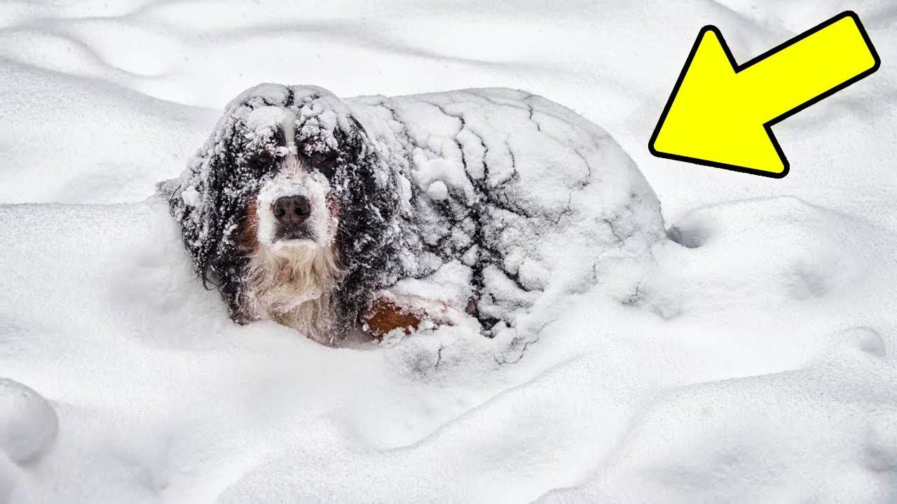 Cão na Neve Escondia Algo Inacreditável. As Pessoas Chamaram a Policia