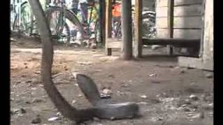 Akola City News Hindi 15 July 2011.flv