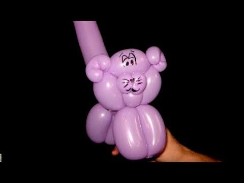 24   Cat   Fire Pixie Ballon Animals