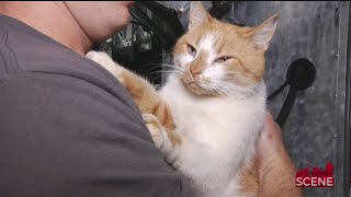 Local Celebrity Cat 'Flame' Named Cat of the Year