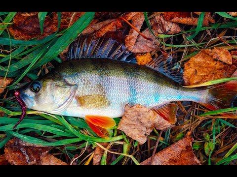 видео: Силикон Crazy Fish Polaris