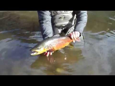 Fly Fishing Sun Valley Secret creek #6