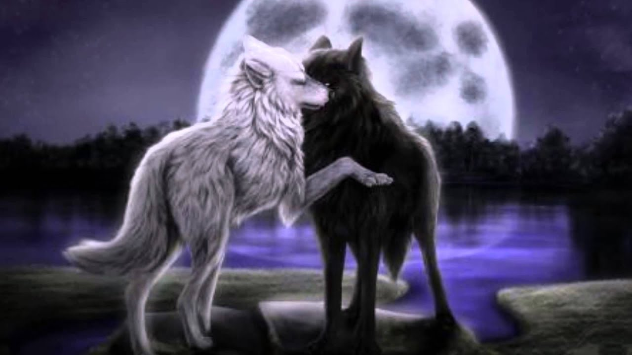 Some Kind Of Beautiful Anime Wolves