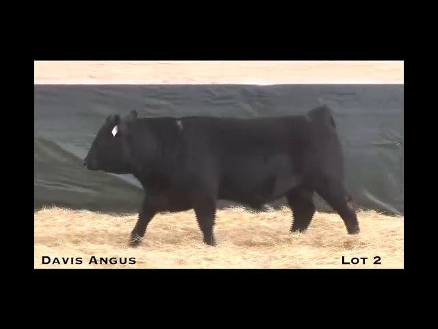 Davis Angus Lot 2