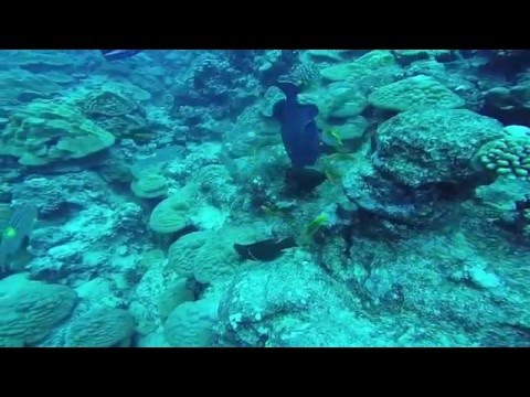Snorkeling and Diving in Rarotonga (Cook Islands)