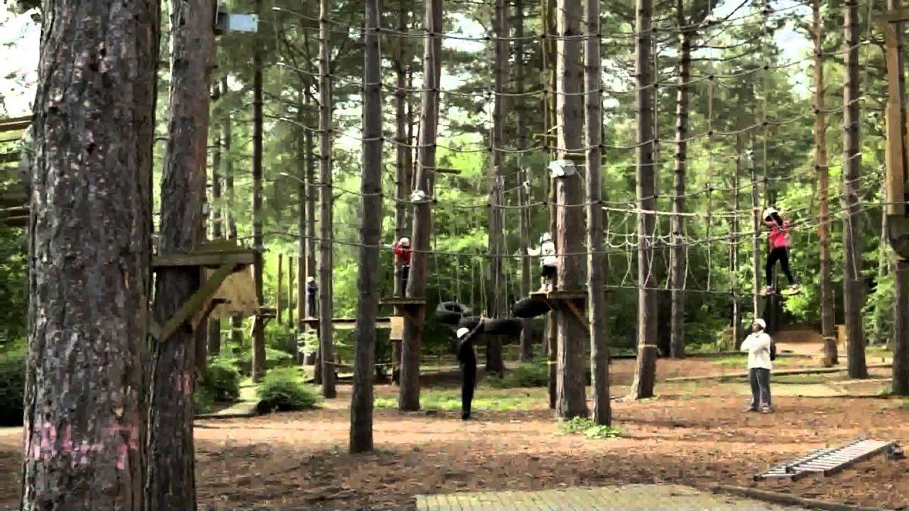 Children S Activity Break Aerial Tree Trekking At Center