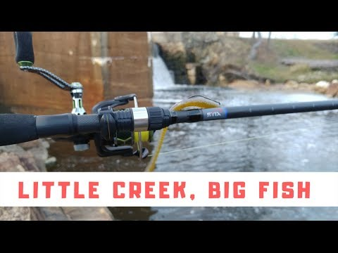 Little Creek, Big Fish Using Stix Fishing Rod